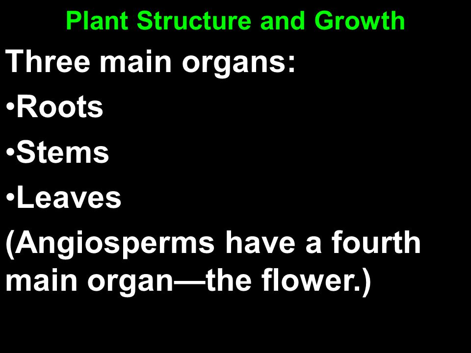 Plant Structure and Growth Three main organs: Roots Stems Leaves (Angiosperms have a fourth main organ—the flower.)