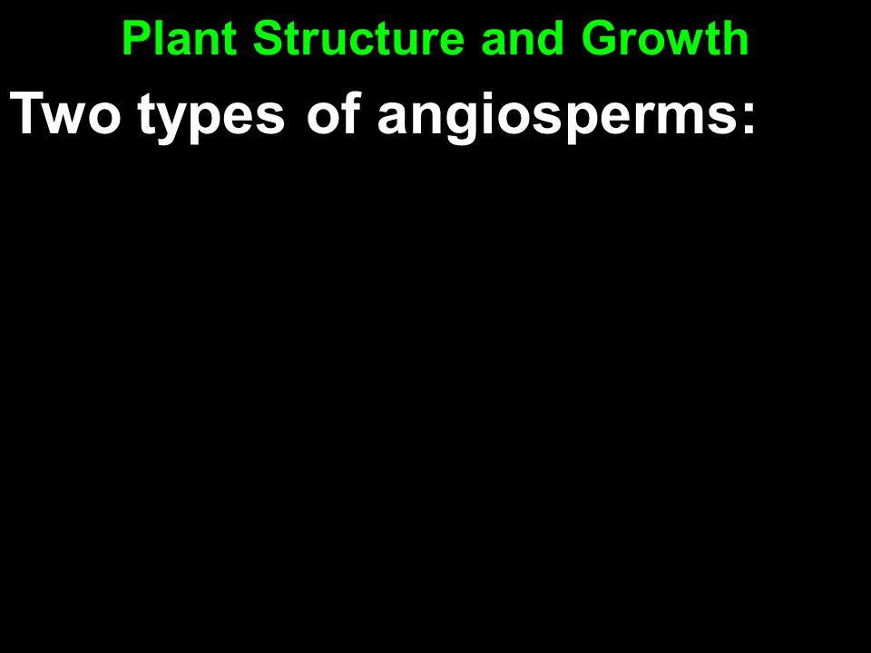 Plant Structure and Growth Two types of angiosperms:
