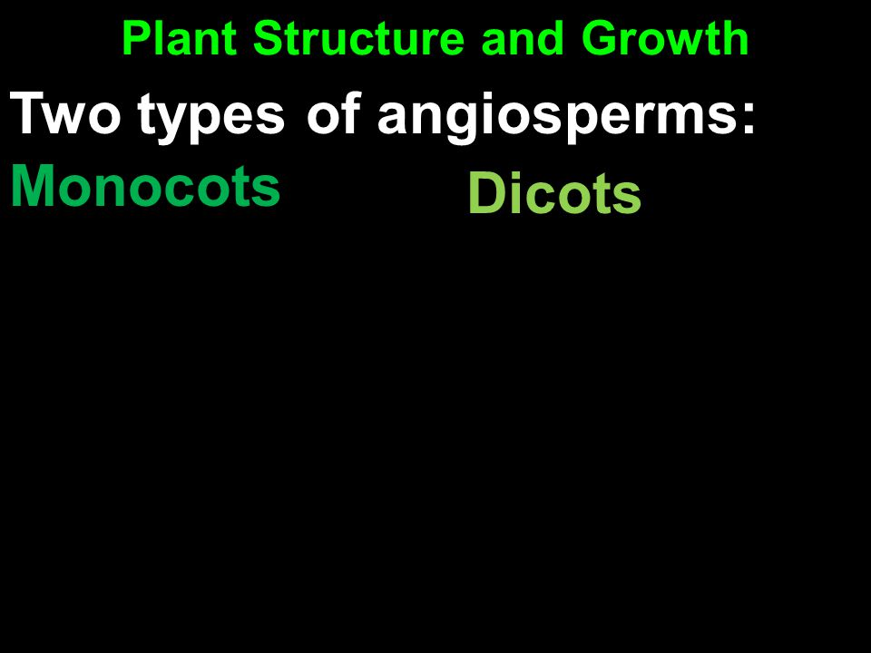 Plant Structure and Growth Monocots Dicots Two types of angiosperms: