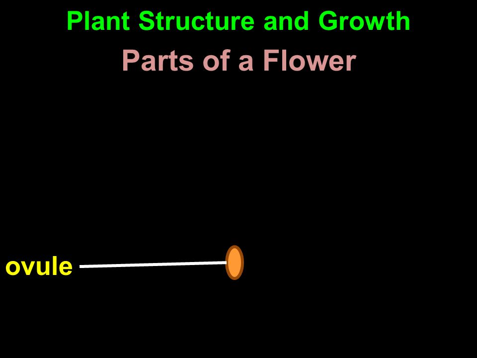ovule Parts of a Flower Plant Structure and Growth