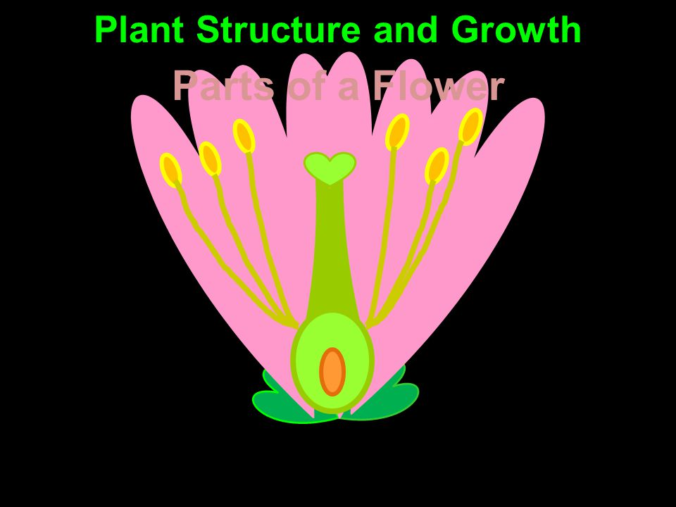 Parts of a Flower Plant Structure and Growth