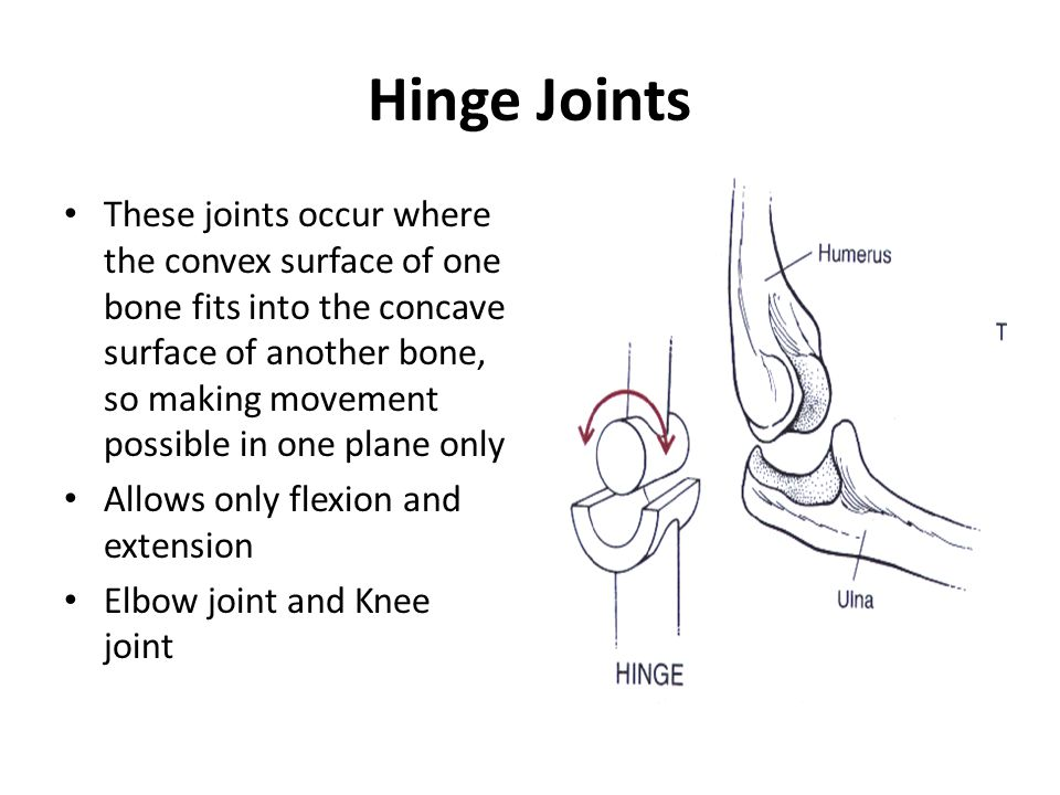 Hinge Joints These joints occur where the convex surface of one bone fits into the concave surface of another bone, so making movement possible in one plane only Allows only flexion and extension Elbow joint and Knee joint