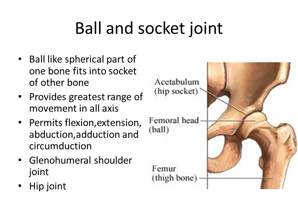 Ball and socket joint Ball like spherical part of one bone fits into socket of other bone Provides greatest range of movement in all axis Permits flexion,extension, abduction,adduction and circumduction Glenohumeral shoulder joint Hip joint