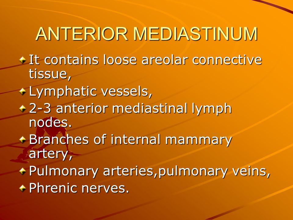 ANTERIOR MEDIASTINUM It contains loose areolar connective tissue, Lymphatic vessels, 2-3 anterior mediastinal lymph nodes.