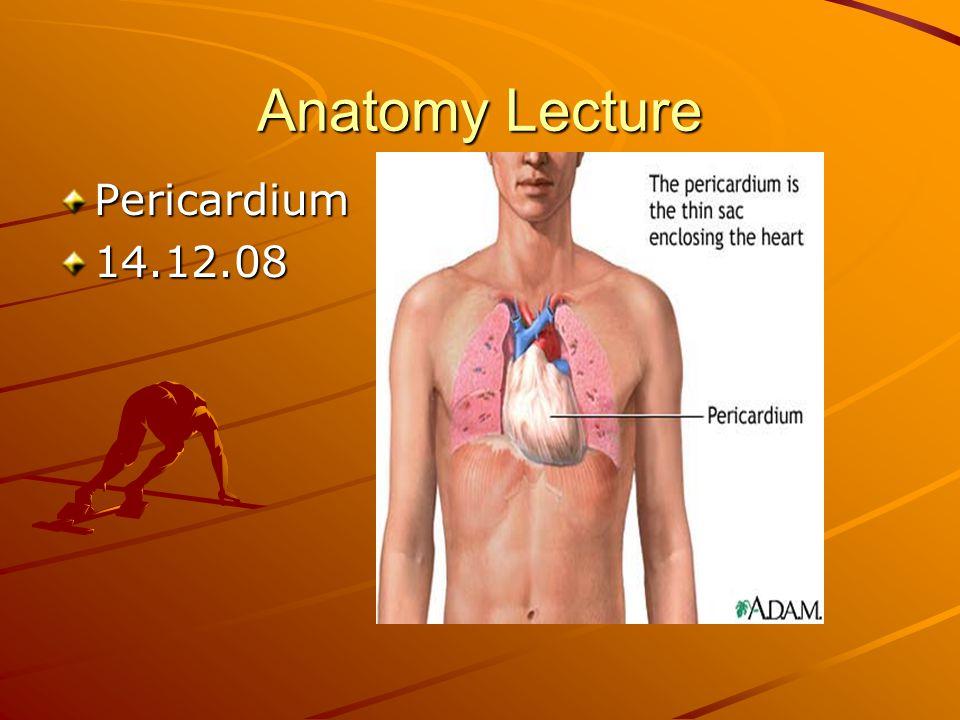 Anatomy Lecture Pericardium14.12.08