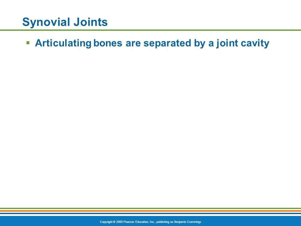 Copyright © 2009 Pearson Education, Inc., publishing as Benjamin Cummings Synovial Joints  Articulating bones are separated by a joint cavity