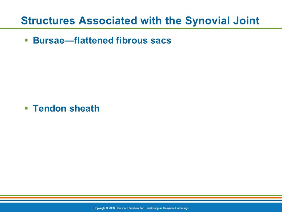Copyright © 2009 Pearson Education, Inc., publishing as Benjamin Cummings Structures Associated with the Synovial Joint  Bursae—flattened fibrous sacs  Tendon sheath
