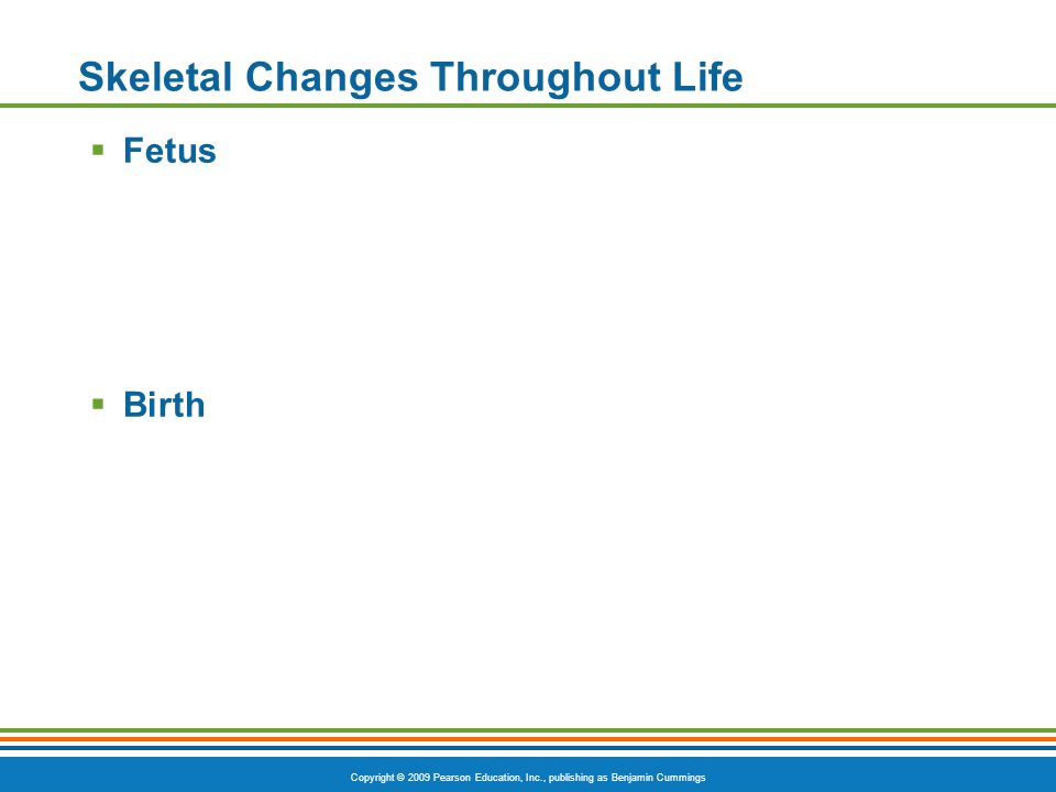 Copyright © 2009 Pearson Education, Inc., publishing as Benjamin Cummings Skeletal Changes Throughout Life  Fetus  Birth