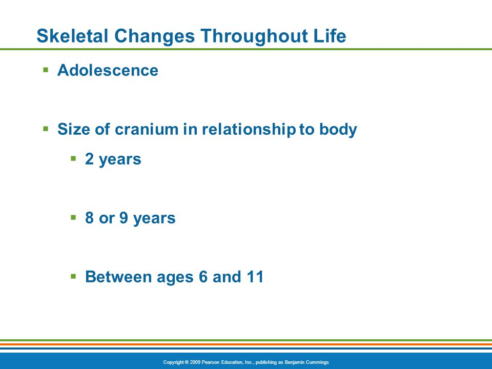 Copyright © 2009 Pearson Education, Inc., publishing as Benjamin Cummings Skeletal Changes Throughout Life  Adolescence  Size of cranium in relationship to body  2 years  8 or 9 years  Between ages 6 and 11