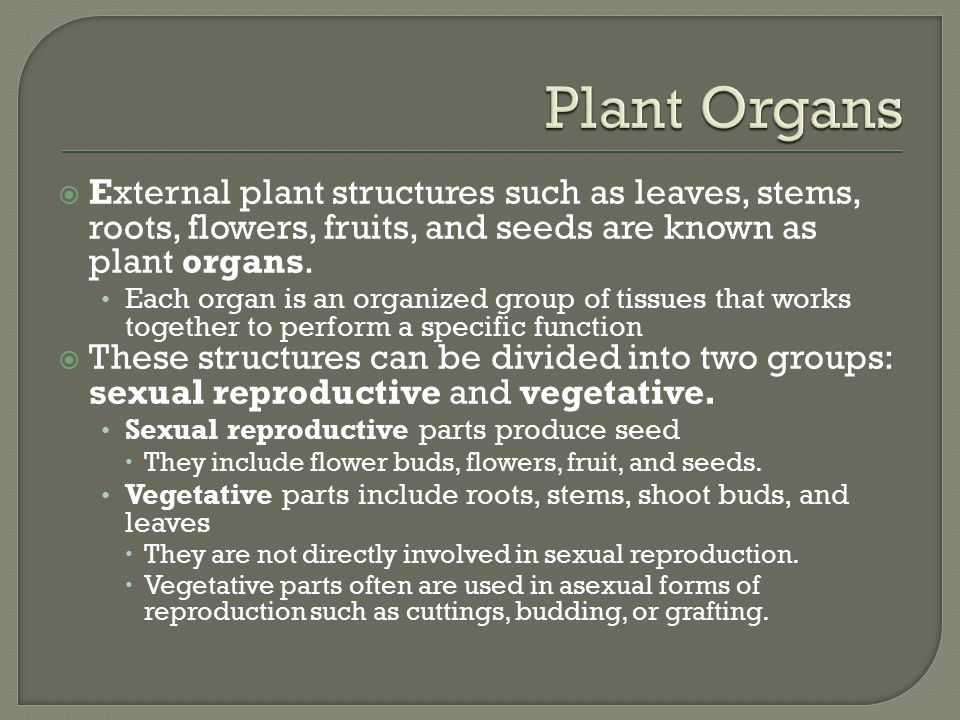  During early development, a seedling absorbs nutrients and moisture from the soil around the sprouting seed.