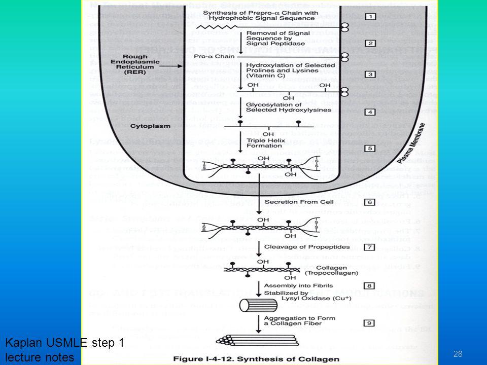 28 Kaplan USMLE step 1 lecture notes