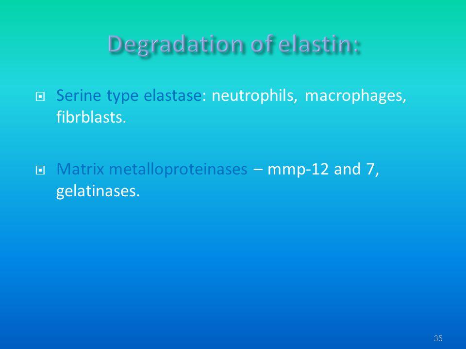  Serine type elastase: neutrophils, macrophages, fibrblasts.  Matrix metalloproteinases – mmp-12 and 7, gelatinases. 35