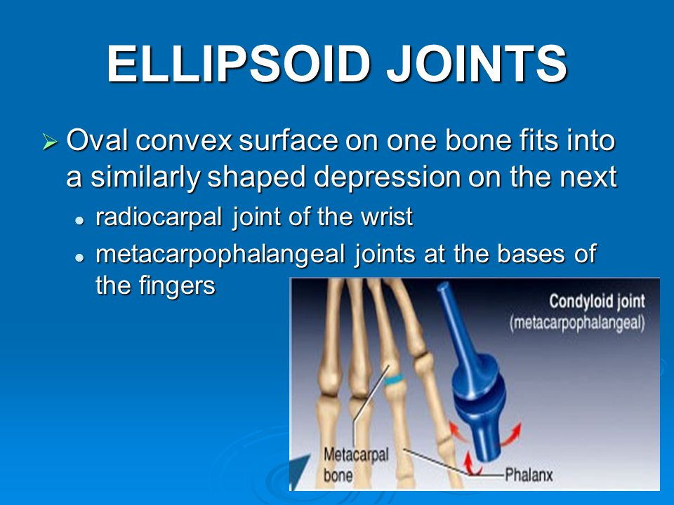 27 ELLIPSOID JOINTS  Oval convex surface on one bone fits into a similarly shaped depression on the next radiocarpal joint of the wrist radiocarpal joint of the wrist metacarpophalangeal joints at the bases of the fingers metacarpophalangeal joints at the bases of the fingers