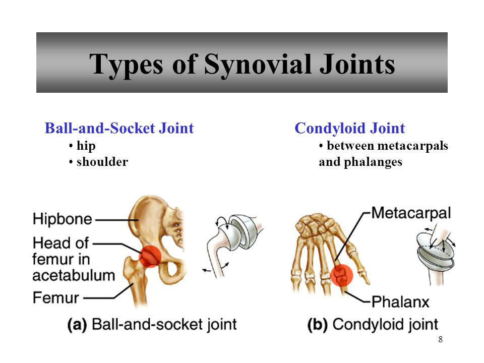 8 Types of Synovial Joints Ball-and-Socket Joint hip shoulder Condyloid Joint between metacarpals and phalanges