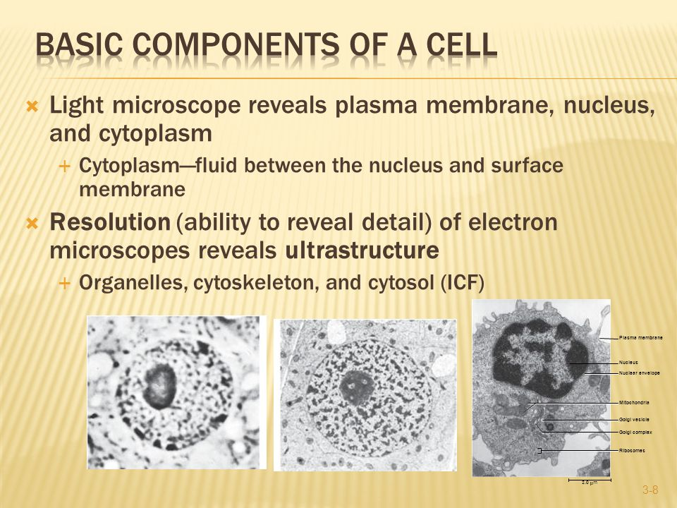  Light microscope reveals plasma membrane, nucleus, and cytoplasm  Cytoplasm—fluid between the nucleus and surface membrane  Resolution (ability to reveal detail) of electron microscopes reveals ultrastructure  Organelles, cytoskeleton, and cytosol (ICF) 3-8 Nucleus Plasma membrane Nuclear envelope Golgi vesicle Golgi complex Mitochondria Ribosomes 2.0m