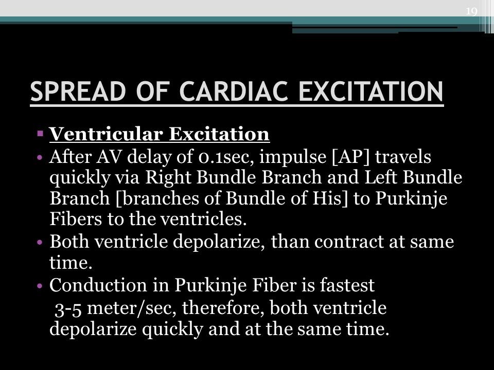 SPREAD OF CARDIAC EXCITATION  Ventricular Excitation After AV delay of 0.1sec, impulse [AP] travels quickly via Right Bundle Branch and Left Bundle Branch [branches of Bundle of His] to Purkinje Fibers to the ventricles.