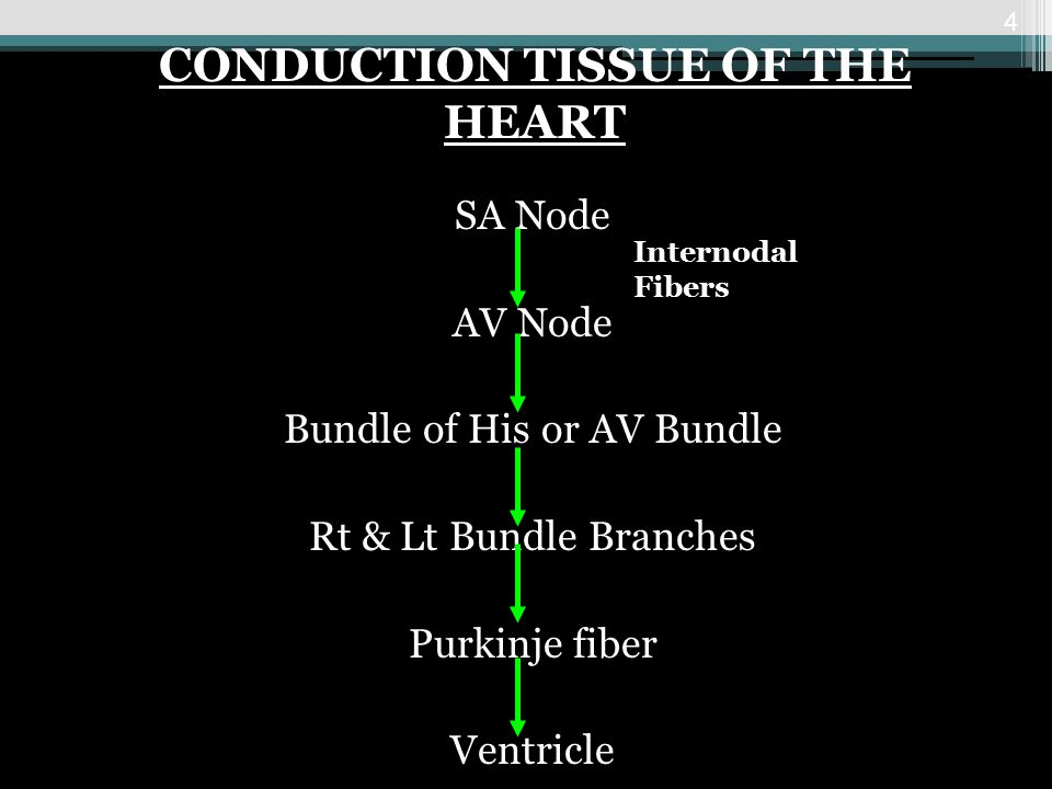 SA Node AV Node Bundle of His or AV Bundle Rt & Lt Bundle Branches Purkinje fiber Ventricle 4 CONDUCTION TISSUE OF THE HEART Internodal Fibers