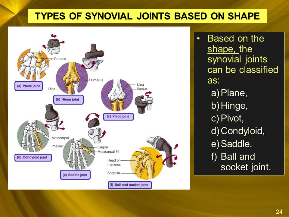 24 Based on the shape, the synovial joints can be classified as: a)Plane, b)Hinge, c)Pivot, d)Condyloid, e)Saddle, f)Ball and socket joint. TYPES OF S