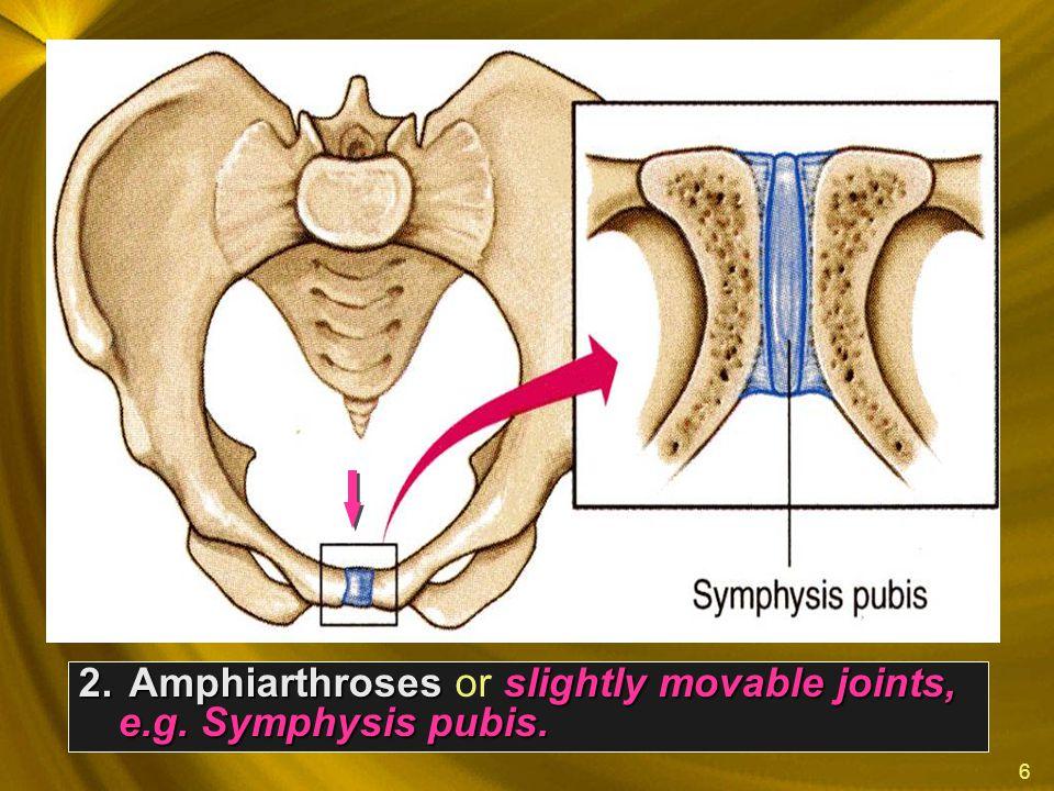 6 2. Amphiarthrosesslightly movable joints, e.g. Symphysis pubis. 2. Amphiarthroses or slightly movable joints, e.g. Symphysis pubis.