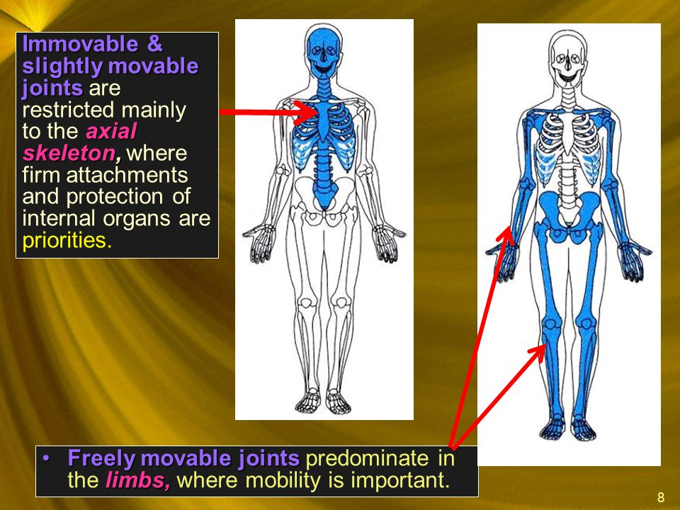 8 Freely movable joints limbs,Freely movable joints predominate in the limbs, where mobility is important. Immovable & slightly movable joints axial s