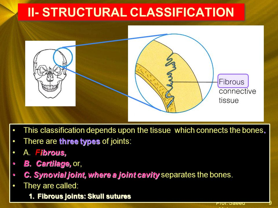 Prof. Saeed Makarem 9 II- STRUCTURAL CLASSIFICATION.This classification depends upon the tissue which connects the bones. three typesThere are three t