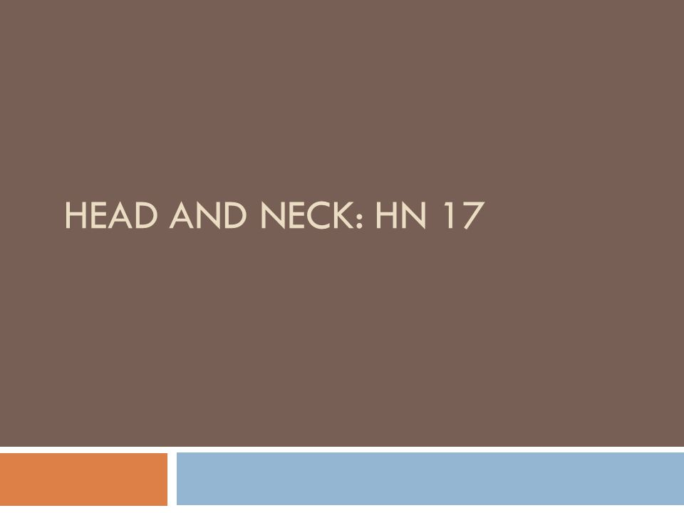 HEAD AND NECK: HN 17