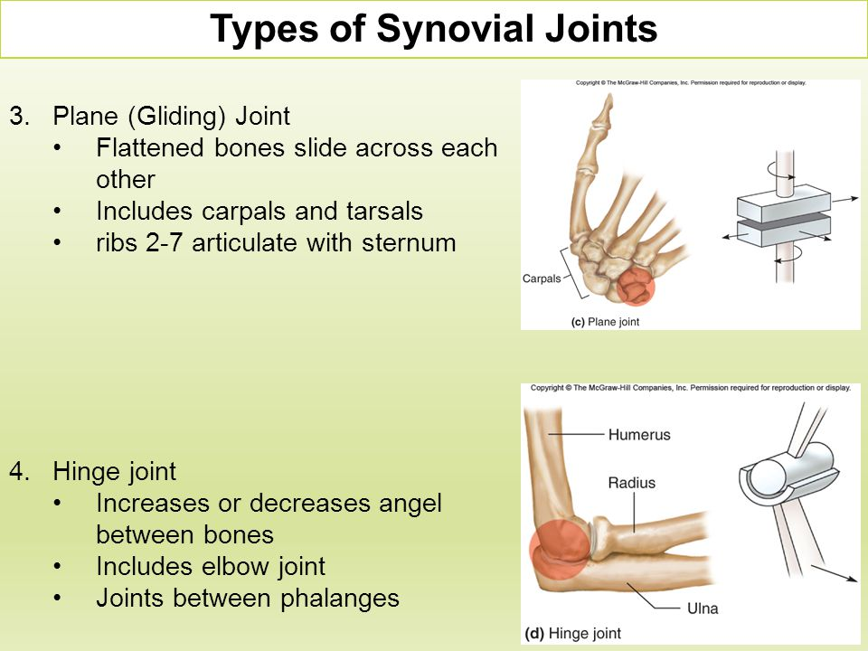 3.Plane (Gliding) Joint Flattened bones slide across each other Includes carpals and tarsals ribs 2-7 articulate with sternum Types of Synovial Joints