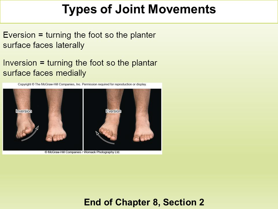 Eversion = turning the foot so the planter surface faces laterally Inversion = turning the foot so the plantar surface faces medially Types of Joint M