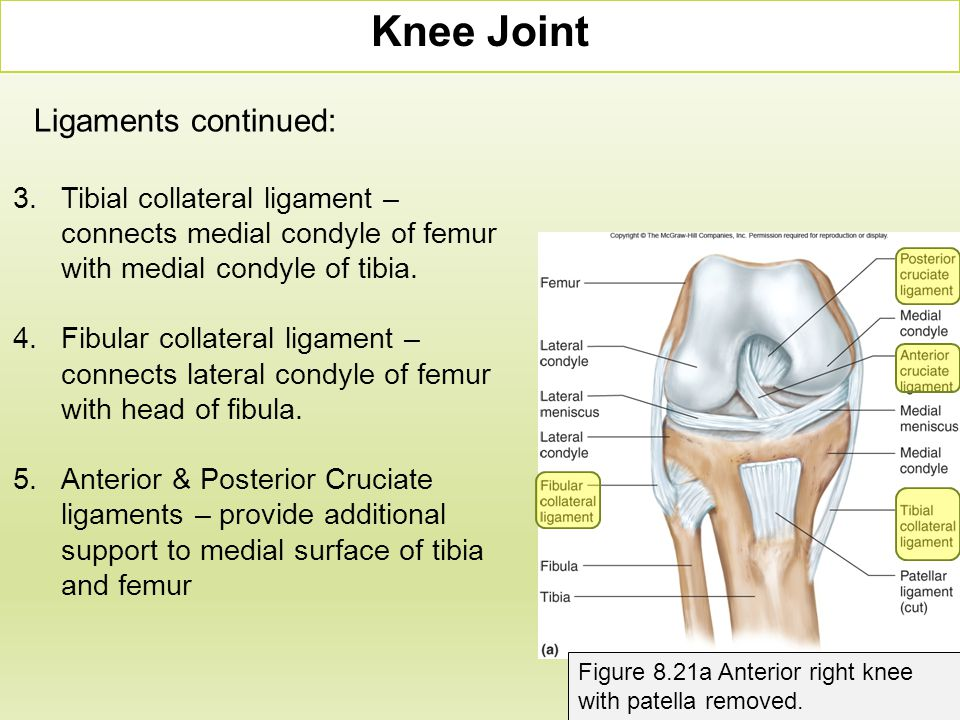 Knee Joint Figure 8.21a Anterior right knee with patella removed. 3.Tibial collateral ligament – connects medial condyle of femur with medial condyle
