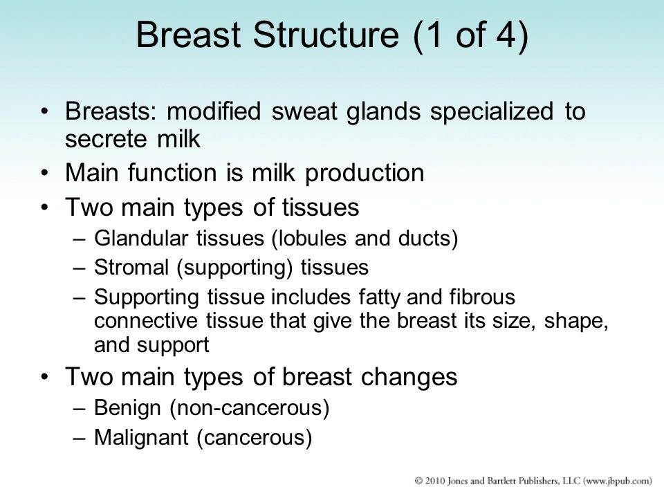 Breast Structure (1 of 4) Breasts: modified sweat glands specialized to secrete milk Main function is milk production Two main types of tissues –Gland