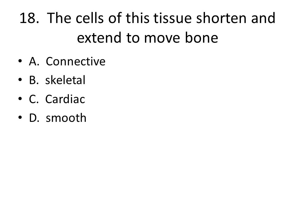 18. The cells of this tissue shorten and extend to move bone A.