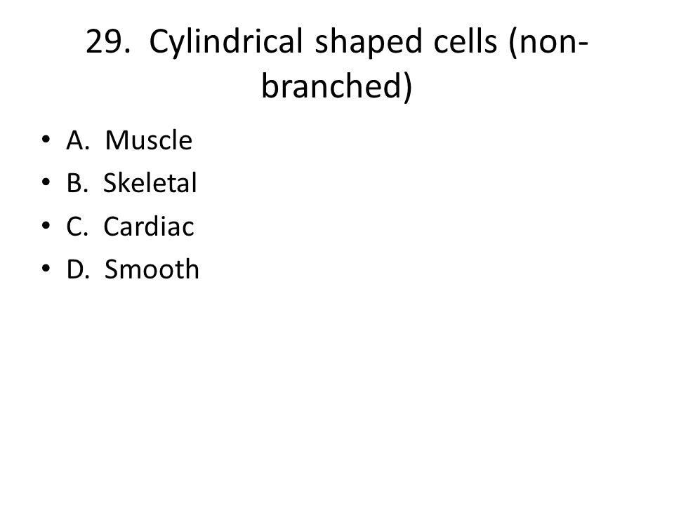 29. Cylindrical shaped cells (non- branched) A. Muscle B. Skeletal C. Cardiac D. Smooth