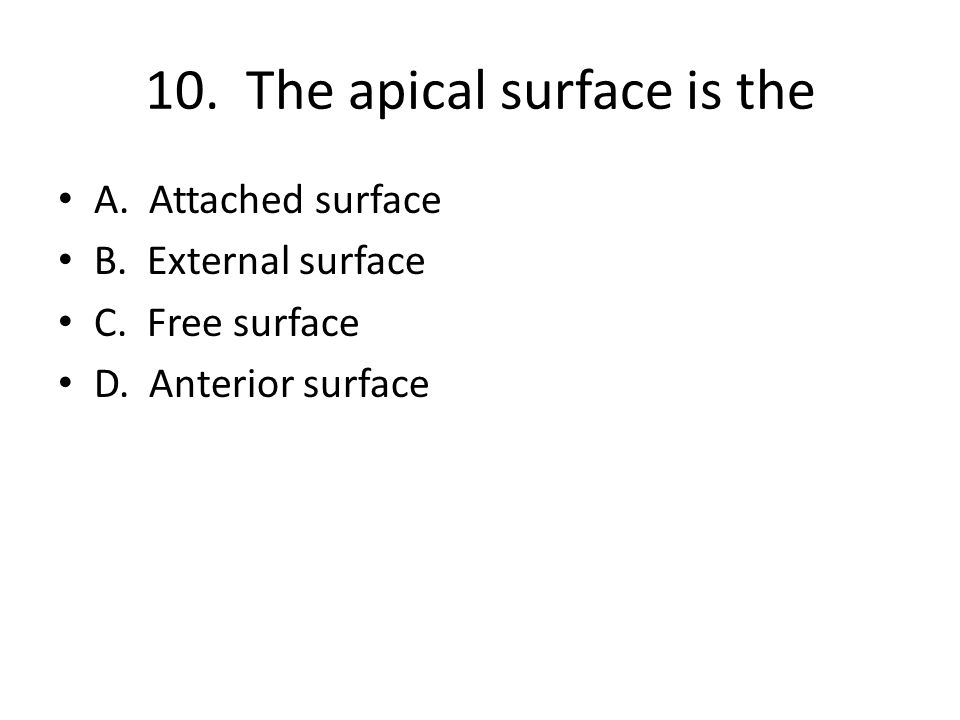 10. The apical surface is the A. Attached surface B.