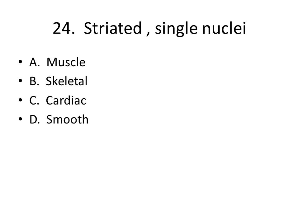 24. Striated, single nuclei A. Muscle B. Skeletal C. Cardiac D. Smooth