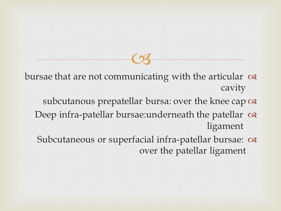   bursae that are not communicating with the articular cavity  subcutanous prepatellar bursa: over the knee cap  Deep infra-patellar bursae:undern