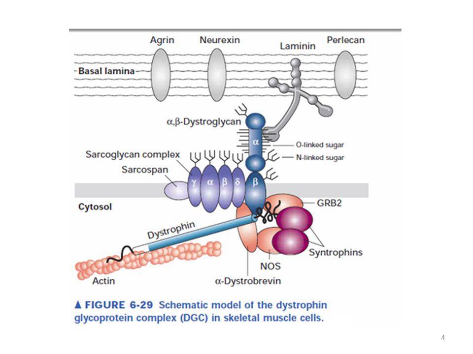 LITERATURE: Alberts B.et al.: Essential Cell Biology.