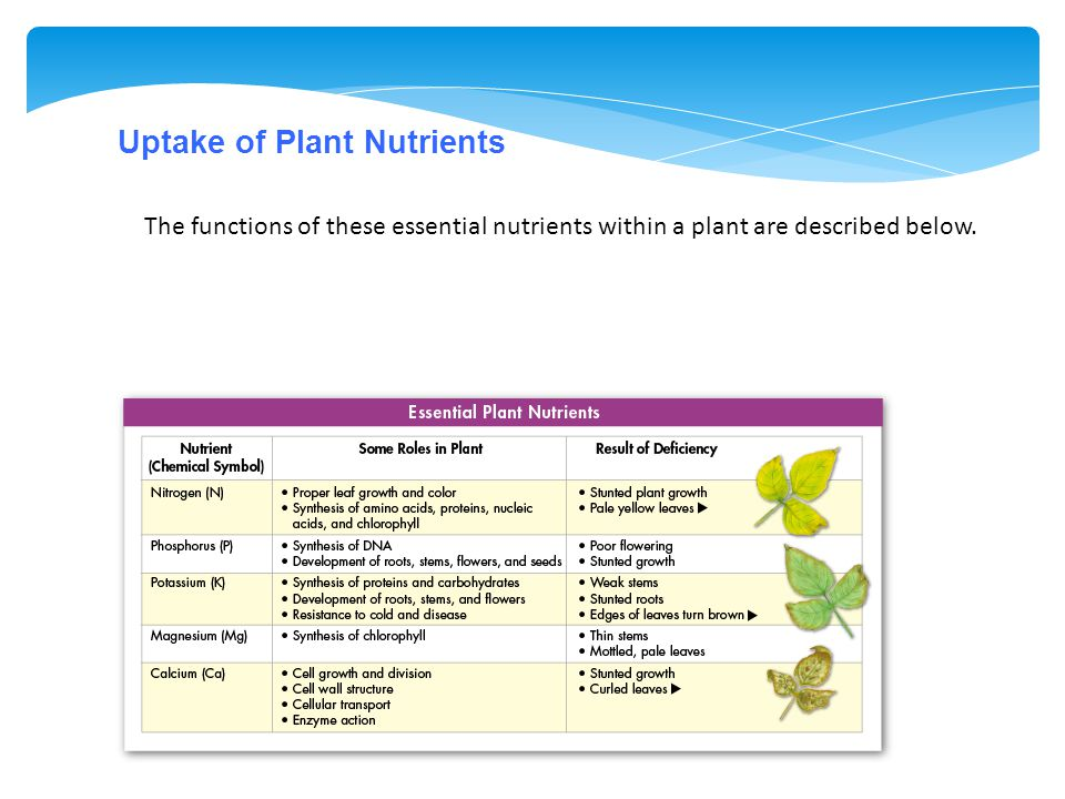 Uptake of Plant Nutrients The functions of these essential nutrients within a plant are described below.