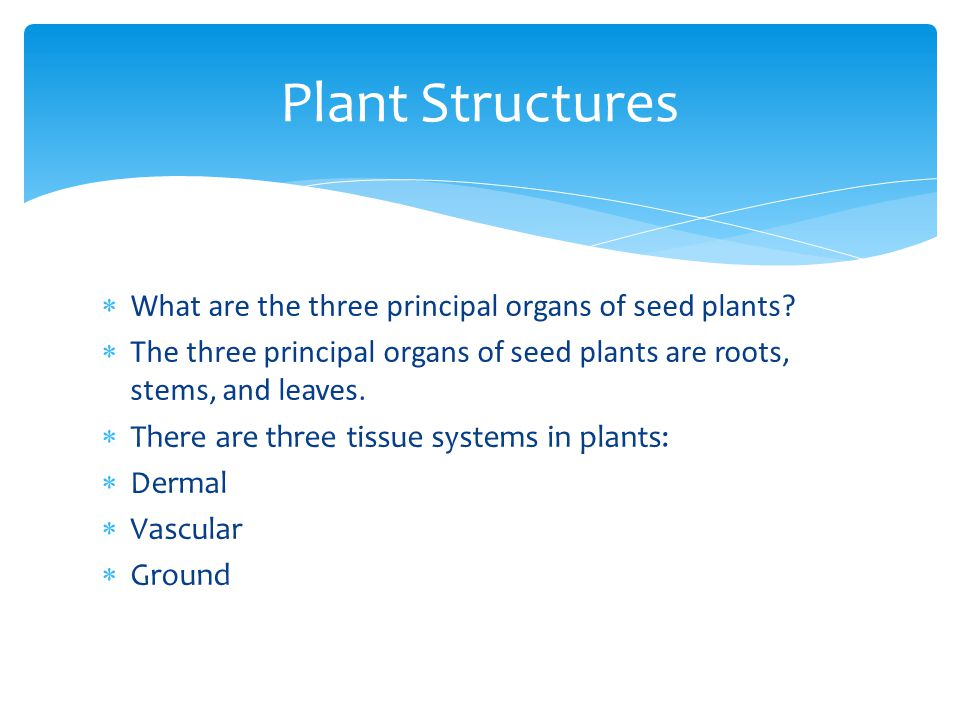  What are the three principal organs of seed plants?  The three principal organs of seed plants are roots, stems, and leaves.  There are three tiss