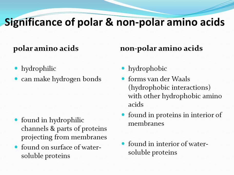 Significance of polar & non-polar amino acids polar amino acids non-polar amino acids hydrophilic can make hydrogen bonds found in hydrophilic channel