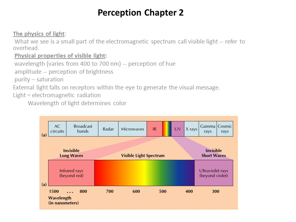 Perception Chapter 2 The physics of light: What we see is a small part of the electromagnetic spectrum call visible light -- refer to overhead.