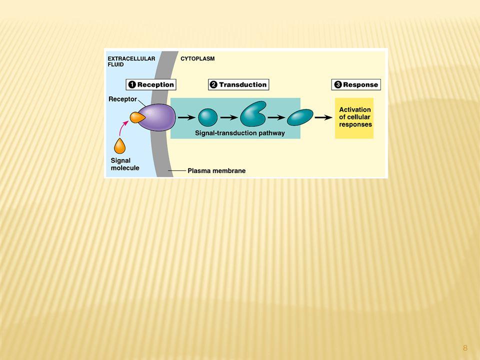 Gene ACVR1 Trivia ACVR1 gene is located on chromosome 2.