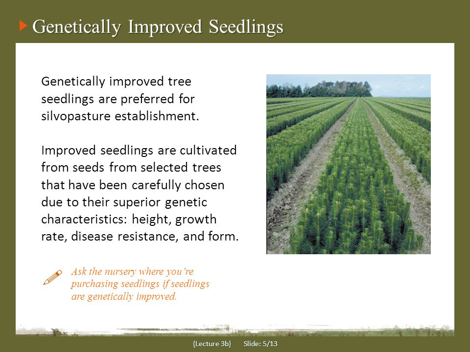 Genetically Improved Seedlings {Lecture 3b} Slide: 5/13 Genetically improved tree seedlings are preferred for silvopasture establishment.