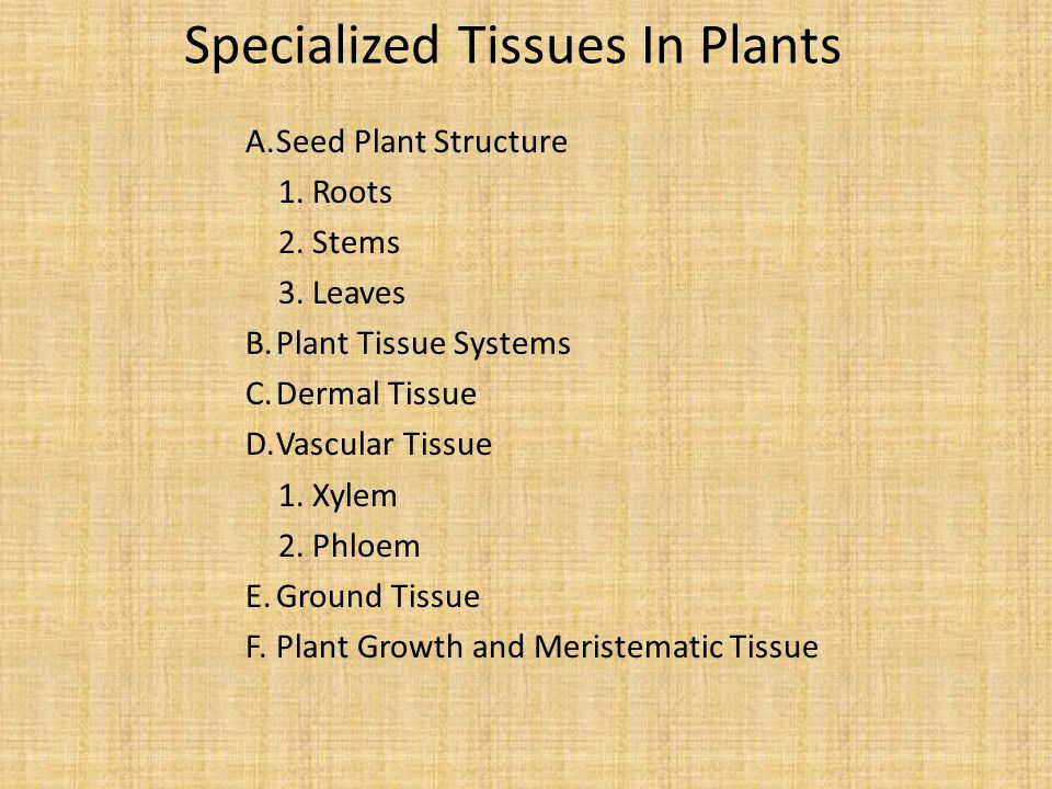 Specialized Tissues In Plants A.Seed Plant Structure 1.Roots 2.Stems 3.Leaves B.Plant Tissue Systems C.Dermal Tissue D.Vascular Tissue 1.Xylem 2.Phloem E.Ground Tissue F.Plant Growth and Meristematic Tissue