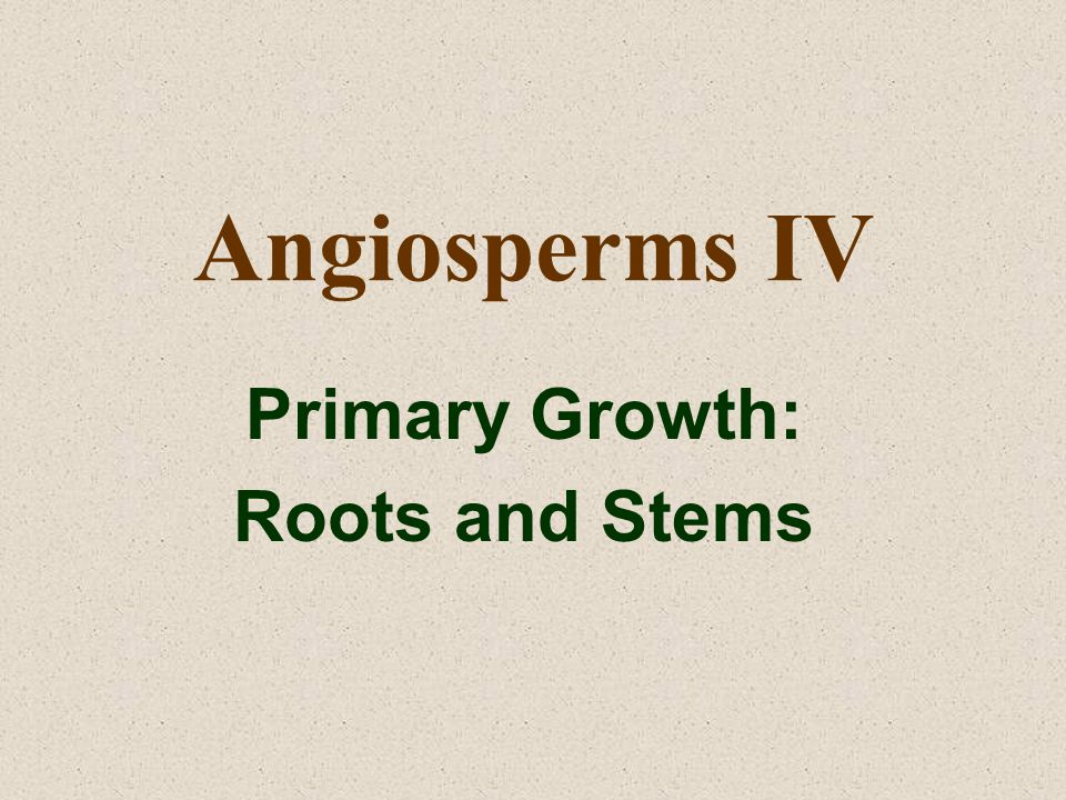 Angiosperms IV Primary Growth: Roots and Stems