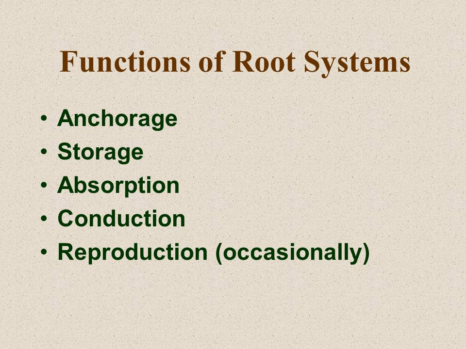Functions of Root Systems Anchorage Storage Absorption Conduction Reproduction (occasionally)