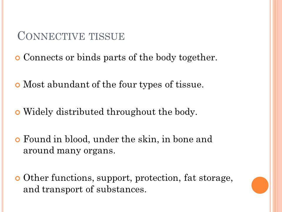 C ONNECTIVE TISSUE Connects or binds parts of the body together.