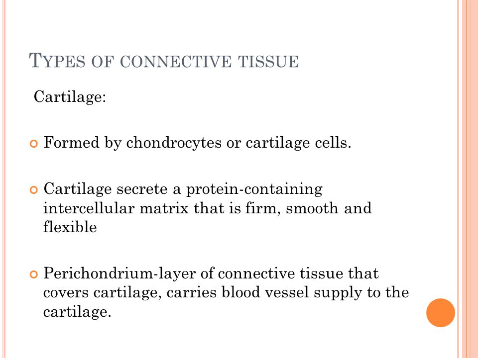 T YPES OF CONNECTIVE TISSUE Cartilage: Formed by chondrocytes or cartilage cells.
