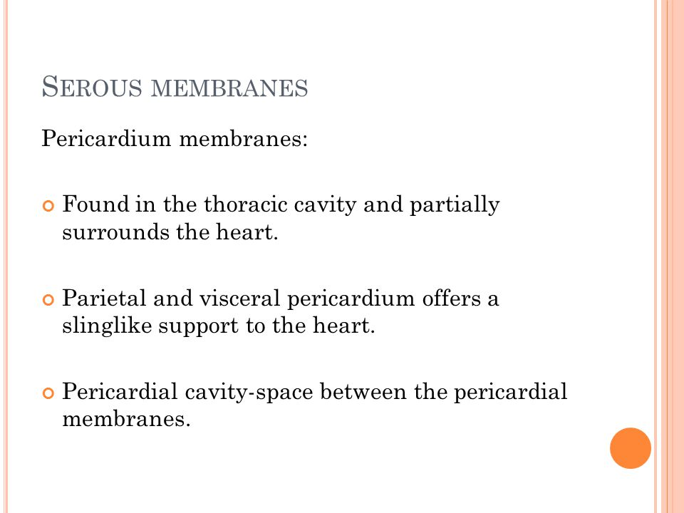 S EROUS MEMBRANES Pericardium membranes: Found in the thoracic cavity and partially surrounds the heart.