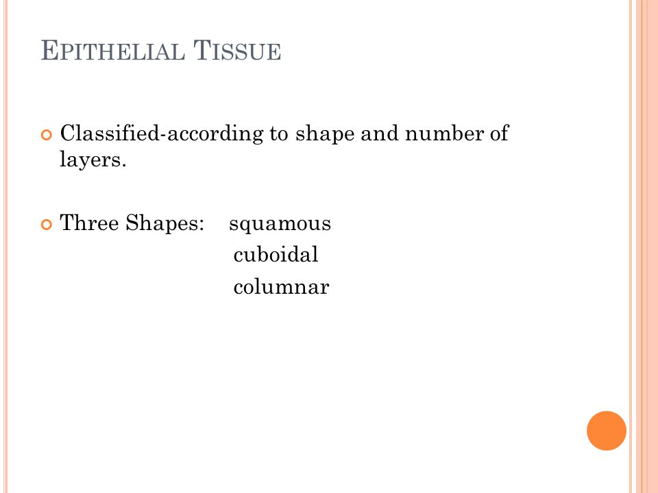 Classified-according to shape and number of layers. Three Shapes: squamous cuboidal columnar