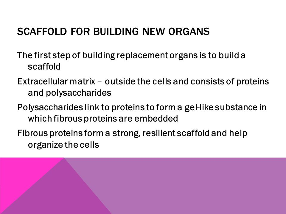 SCAFFOLD FOR BUILDING NEW ORGANS The first step of building replacement organs is to build a scaffold Extracellular matrix – outside the cells and con